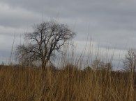 A tree photographed from afar stands under a gloomy sky. Grasses cover the foreground.