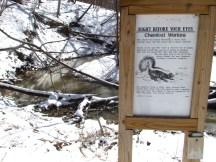 skunk sign winter