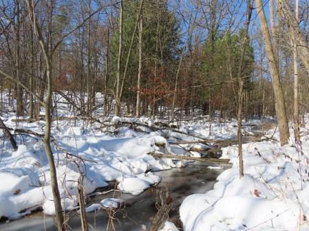 creek near cedars