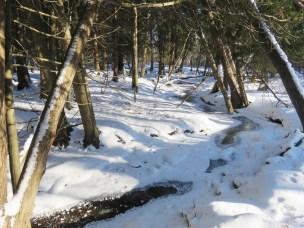 cedar swamp oakland county