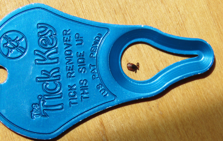 tick and TickKey