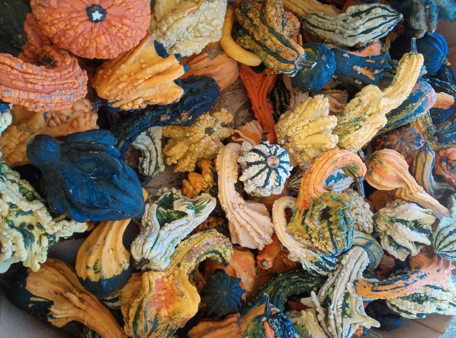 a bunch of small gourds