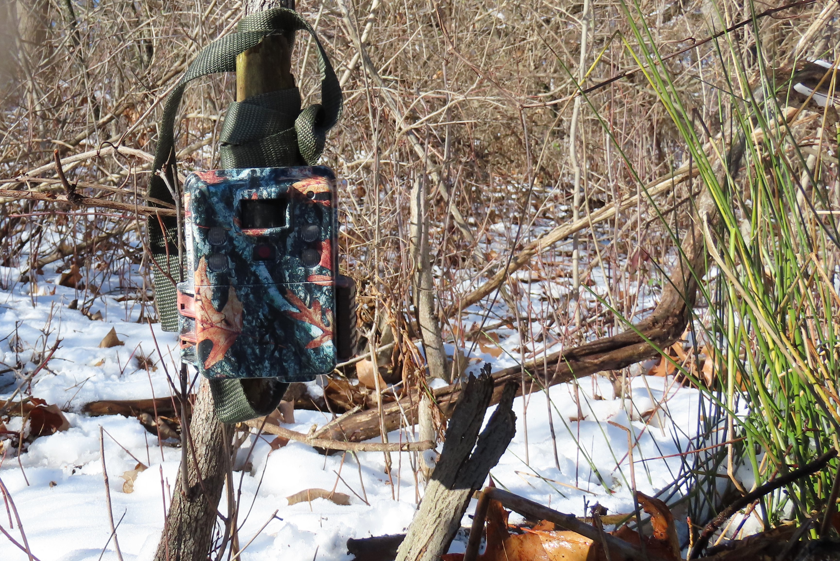 trail camera in woods