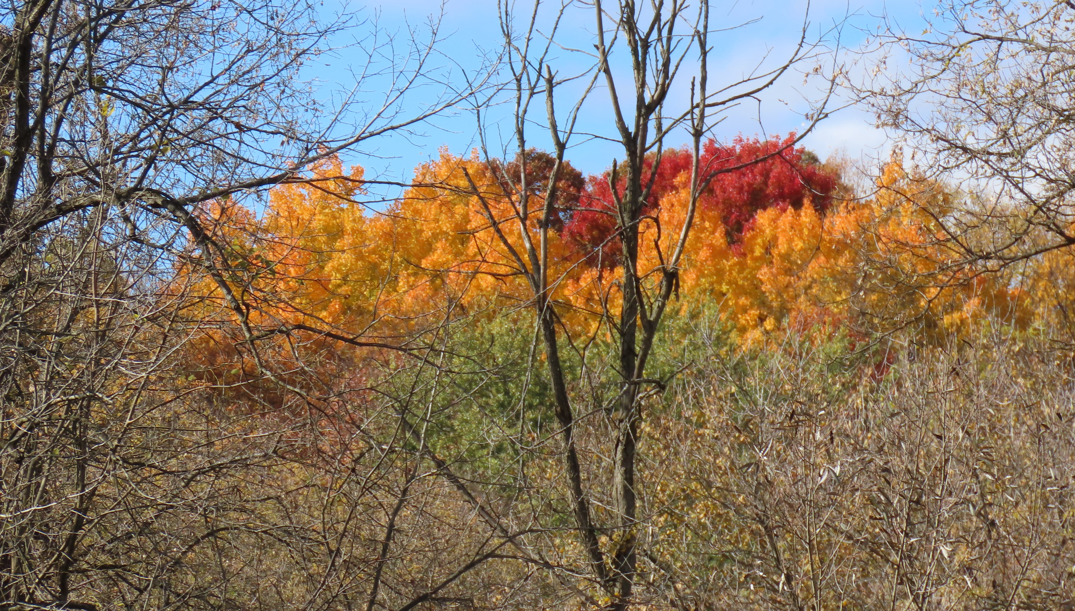 Trees dressed in autumn colors of red, orange, brown, and yellow