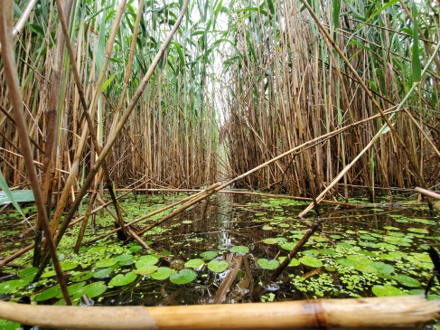 Invasive Phragmites and Invasive European Frogbit, contact us to learn more about invasive species