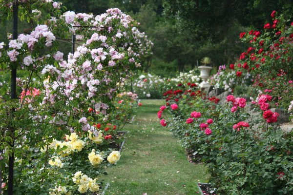 rose garden Oakland Rose Garden | Living in the O