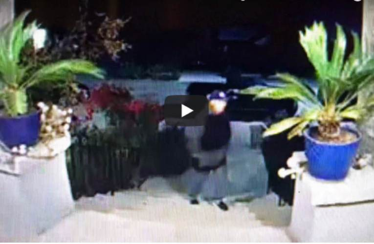 Oakland Crime News: Theft Of Potted Plants Caught On Video