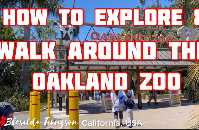 How To Explore And Walk Around The Oakland Zoo During Your Visit