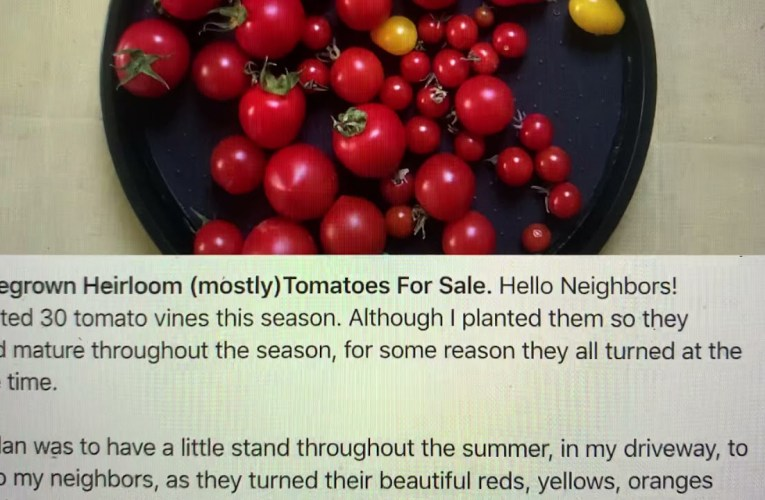 Homegrown Oakland Heirloom Tomatoes For Sale In Adams Point As Of August 2 2021