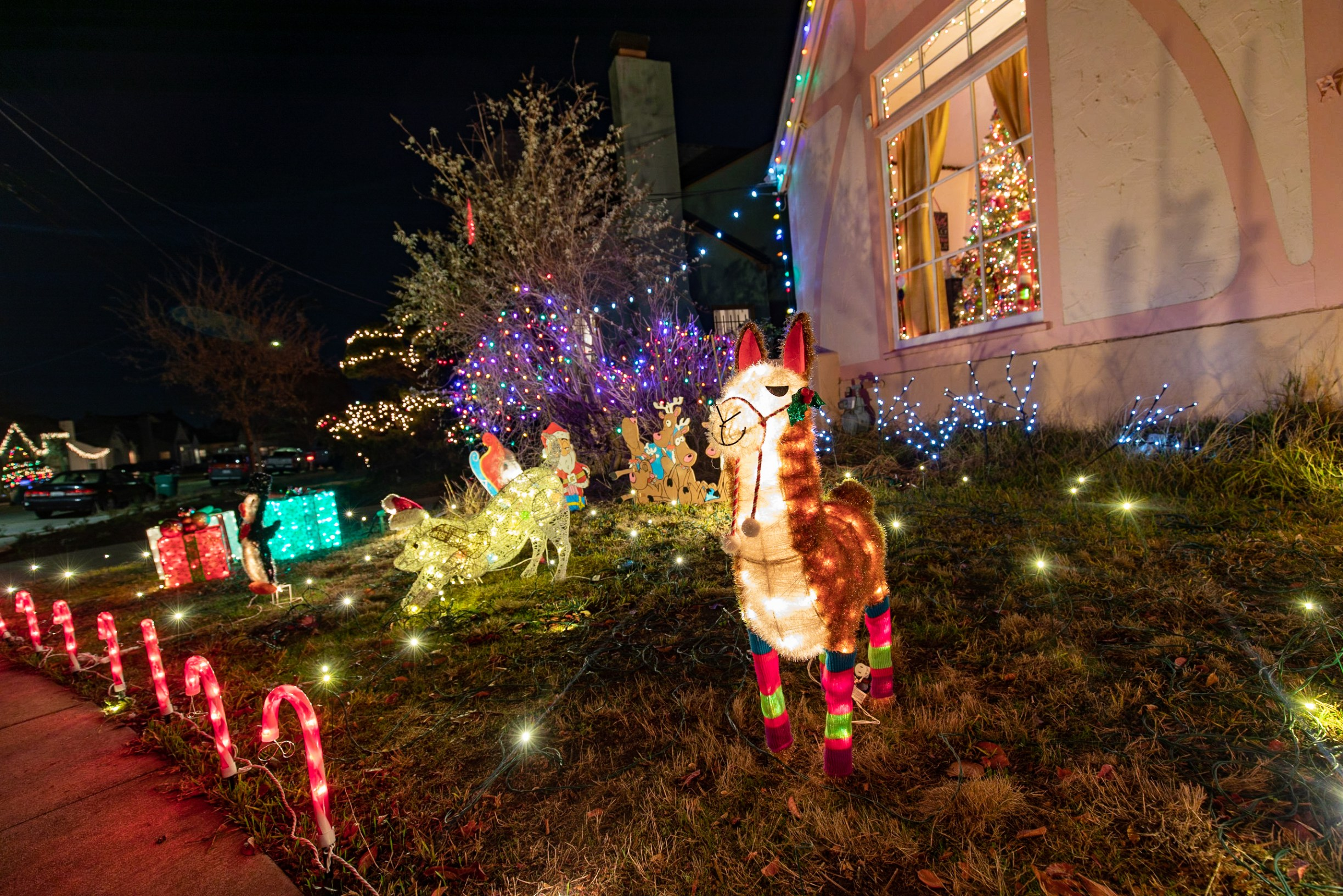 Christmas decorations covering the house and lawns of Picardy Drive residents.