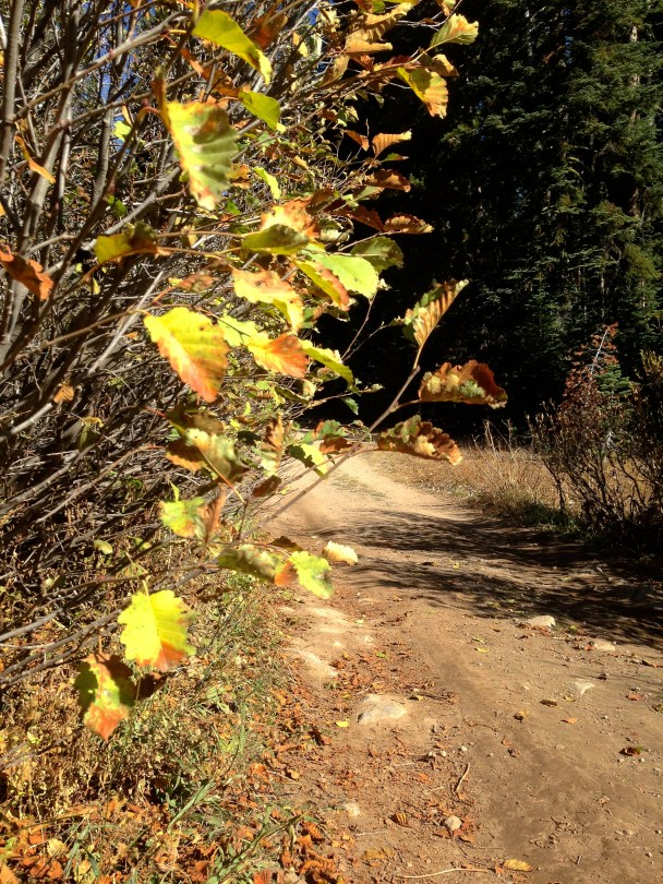 Fall colors on the PCT