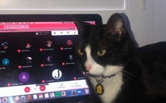 Senior Michelle Velikovsky's cat sits slightly on top of her computer while she's in the middle of class. (Photo courtesy of Michelle Velikovsky)