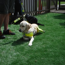 year-2-guide-dogs-2