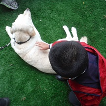 year-2-guide-dogs-9