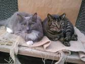 Our shop cats, Gracie (gone but not forgotten) & Ozzie
