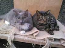Our shop cats, Gracie (gone but not forgotten) & Ozzie