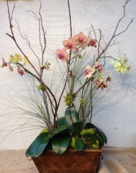 Fall Orchid Arrangement