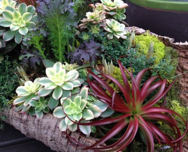 Succulents and Airplants