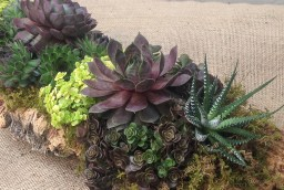 Succulents, Planted in Cork
