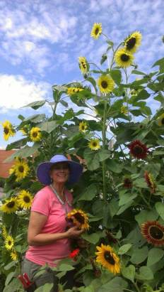 Kris, dwarfed by the sunflowers...