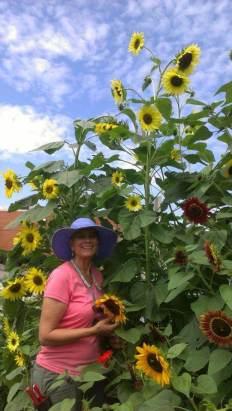 Kris, dwarfed by the sunflowers...