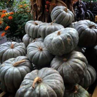 Fall - Pumpkins