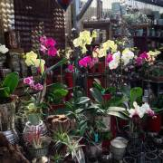 Greenhouse - Orchids