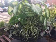 Container Planting for Shade - Summer 2017
