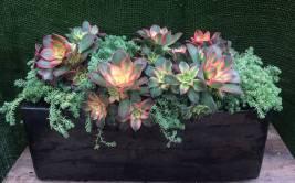 Succulent Container Planting