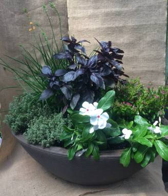 Container Garden with Herbs and Annuals - Summer 2017