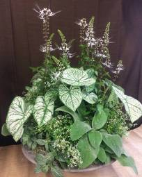 Wedding Planter - Cat's Whiskers, Caladium, Euphorbia, Fittonia, Lamb's Ears