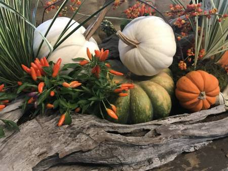 Driftwood with Pumpkins and Ornamental Peppers