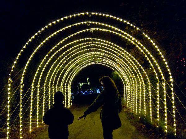 oakland zoo, zoolights, tunnel of light