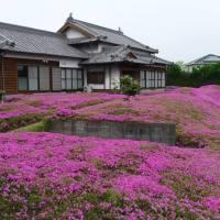 #PovesteJaponeza. Mii de flori pentru sotia nevazatoare