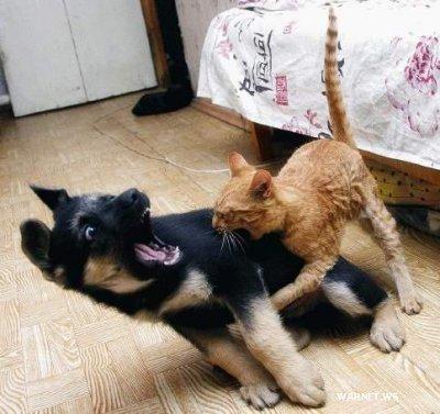 poze-animale-amuzante-pisici-caini-foame