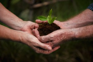 soil and plant cupped in hands