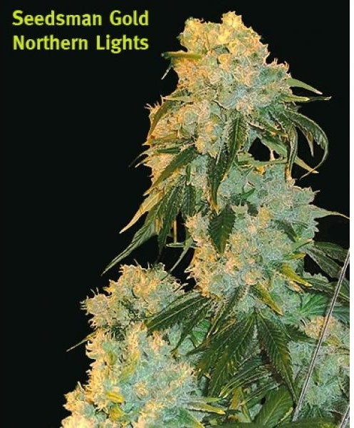 Northern Lights Cbd Level