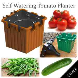 single terracotta self-watering tomato planter