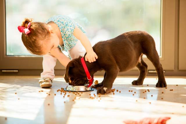 imagen alimentación perros