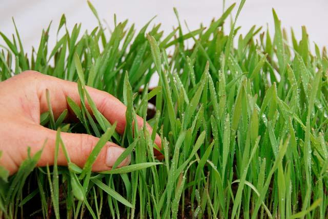 imagen fitosanitarios