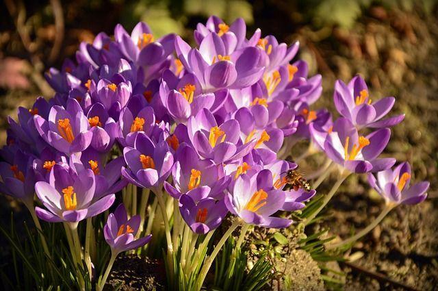 imagen semillas y bulbos