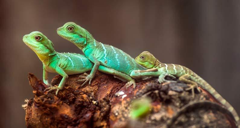 imagen reptiles