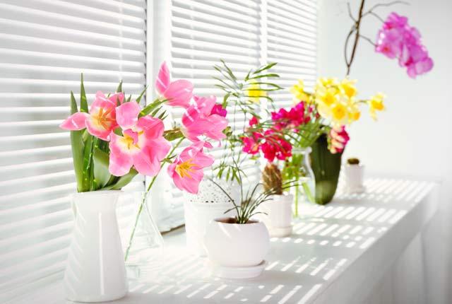 imagen plantas interior con flor
