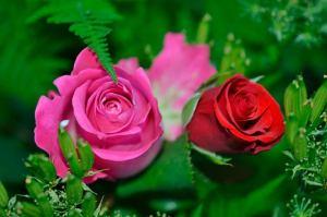 imagen rosales