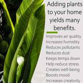 Adding Plants in Your Home