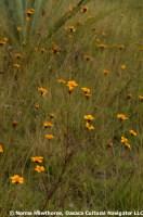 WildMarigolds-3