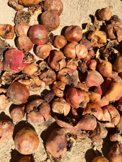 DryPomegranates