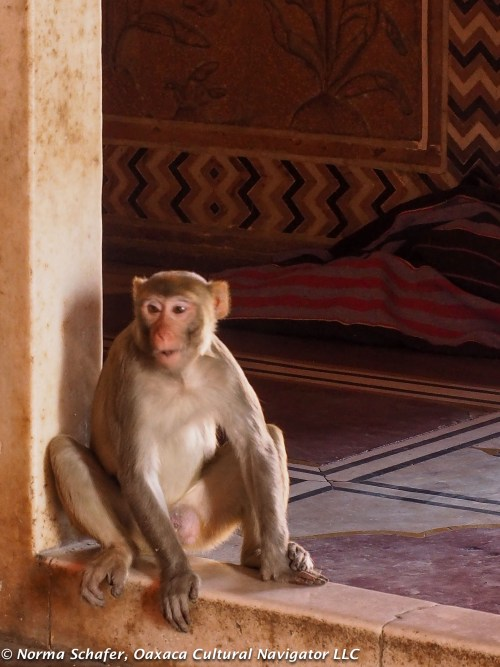 Monkeys run free throughout the Taj Mahal grounds, especially the mosque.