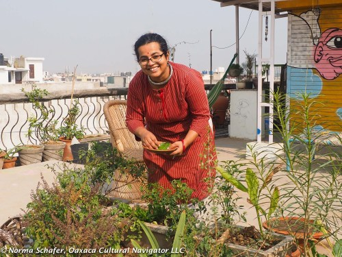 Nidhi picks rocket, chard and dill on her rooftop garden.