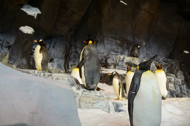Sea Pinguim 1